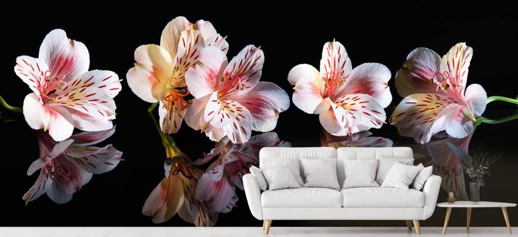 Overige - Alstroemeria bloemen met reflectie - Showroom 1