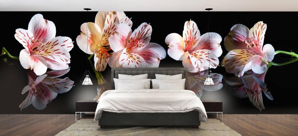 Overige - Alstroemeria bloemen met reflectie - Showroom 2