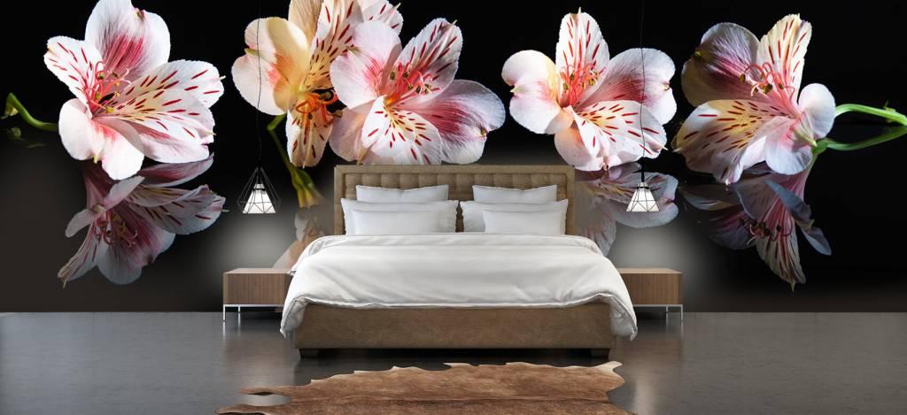 Overige - Alstroemeria bloemen met reflectie - Showroom 3