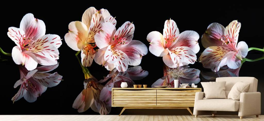 Overige - Alstroemeria bloemen met reflectie - Showroom 4