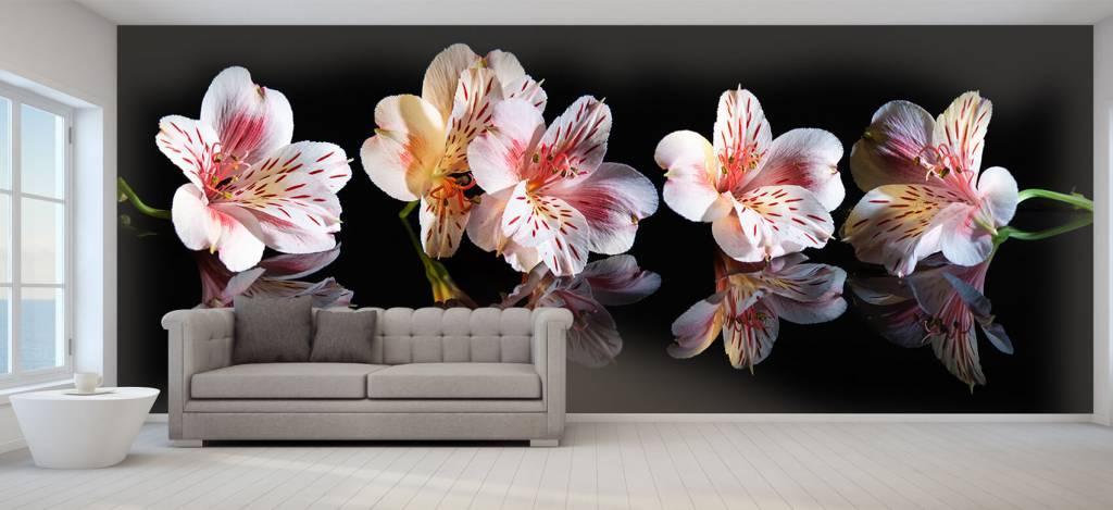 Overige - Alstroemeria bloemen met reflectie - Showroom 5