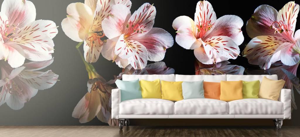 Overige - Alstroemeria bloemen met reflectie - Showroom 6