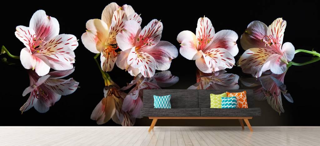 Overige - Alstroemeria bloemen met reflectie - Showroom 7