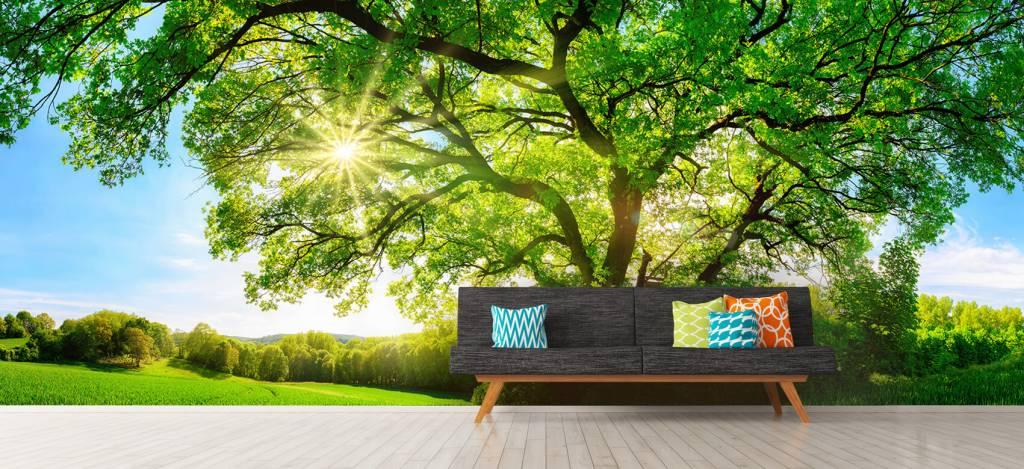 Bomen - Boom met zonnestralen - Kantoor 1