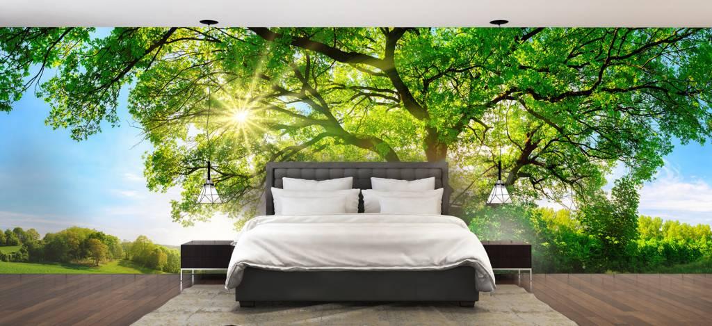Bomen - Boom met zonnestralen - Kantoor 2