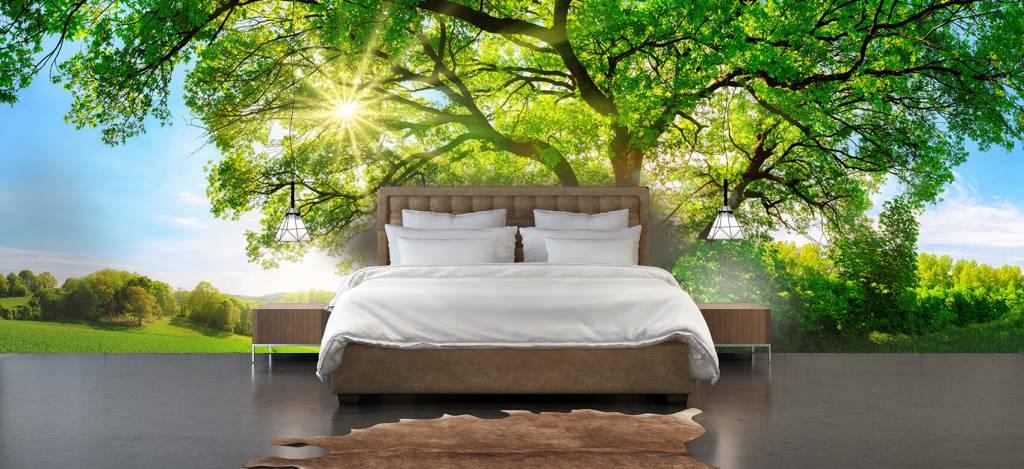 Bomen - Boom met zonnestralen - Kantoor 3
