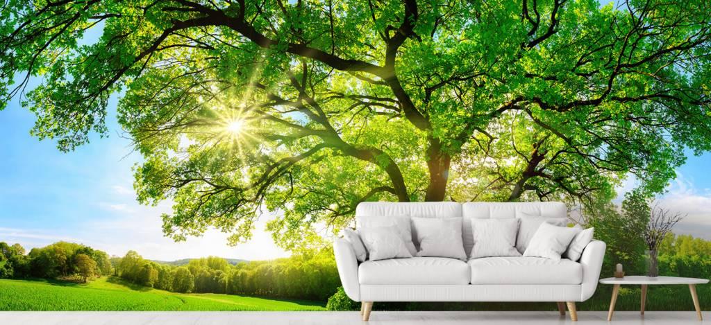 Bomen - Boom met zonnestralen - Kantoor 4