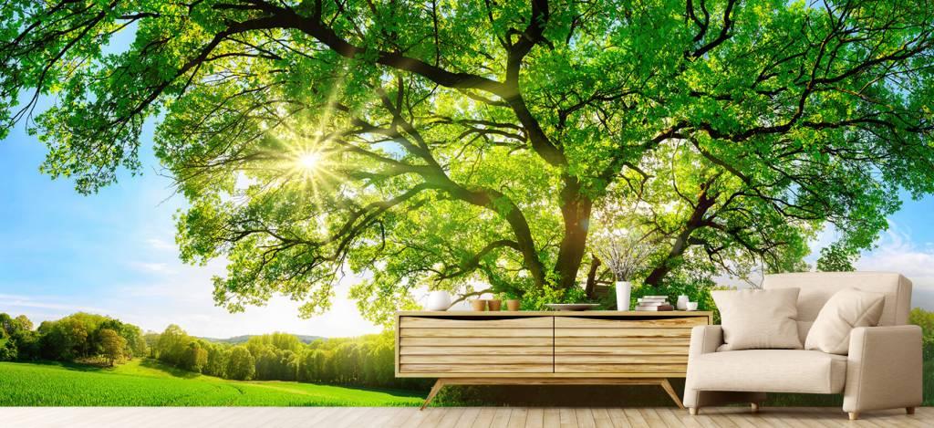Bomen - Boom met zonnestralen - Kantoor 5