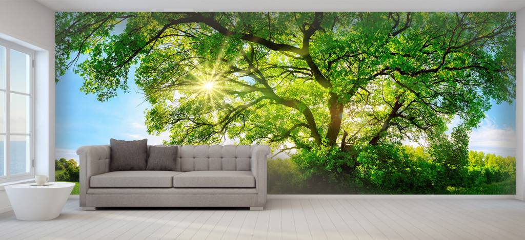 Bomen - Boom met zonnestralen - Kantoor 6