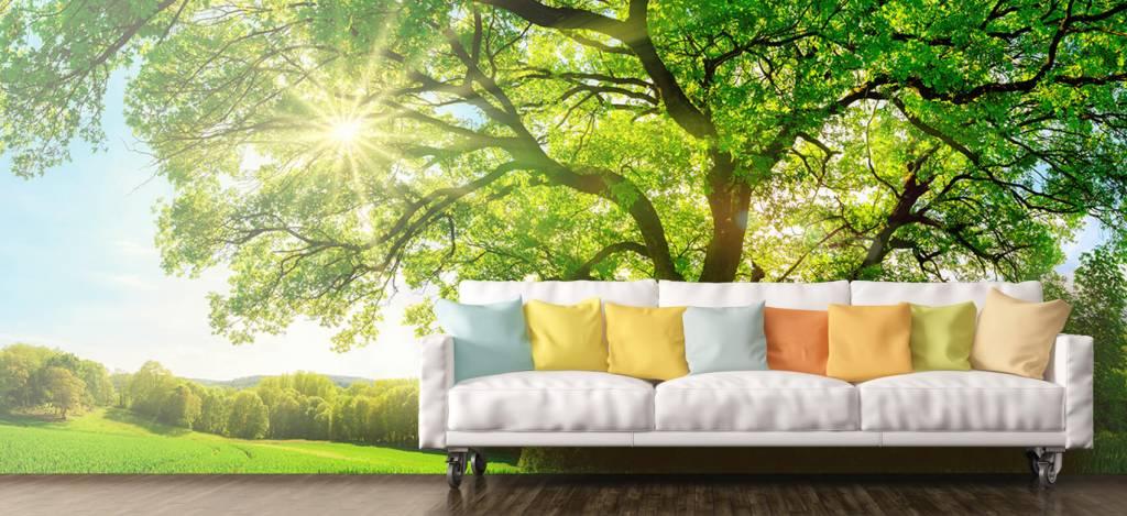 Bomen - Boom met zonnestralen - Kantoor 7
