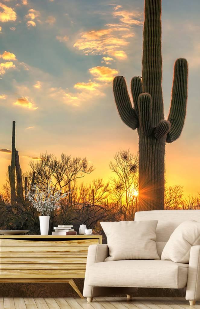 Landschap - Cactus met zonsondergang - Slaapkamer 1