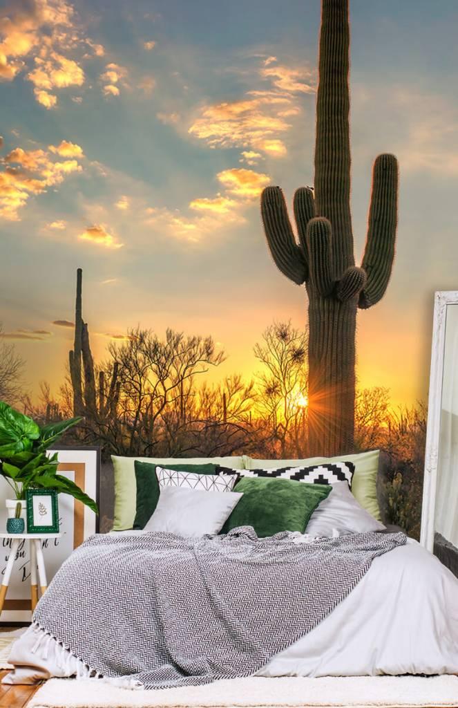 Landschap - Cactus met zonsondergang - Slaapkamer 3