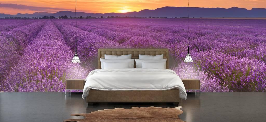 Lavendel - Veld vol lavendel - Slaapkamer 2