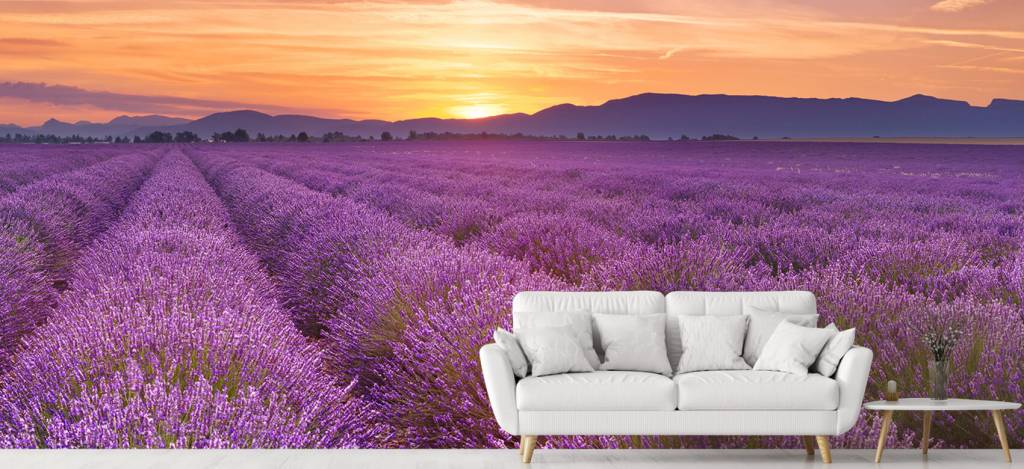 Lavendel - Veld vol lavendel - Slaapkamer 3