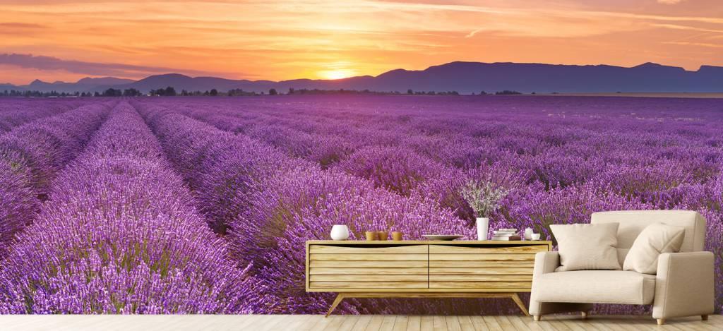Lavendel - Veld vol lavendel - Slaapkamer 4