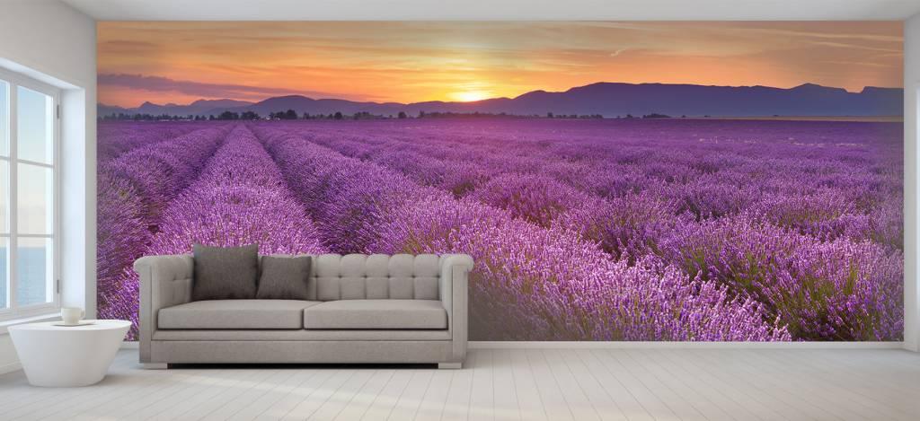 Lavendel - Veld vol lavendel - Slaapkamer 5