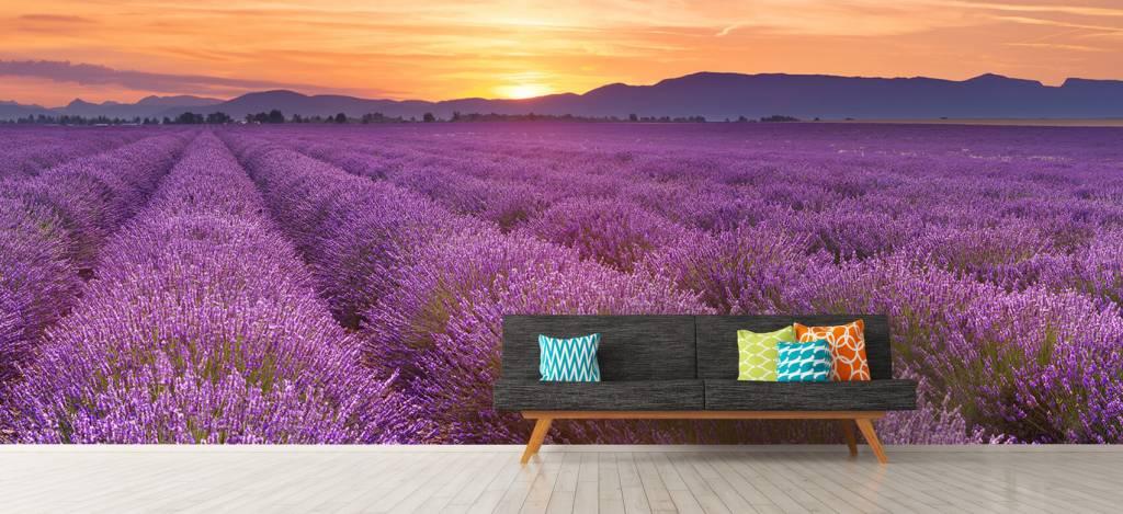 Lavendel - Veld vol lavendel - Slaapkamer 7