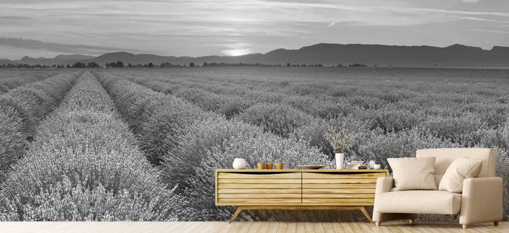 Lavendel - Veld vol lavendel - Slaapkamer 8