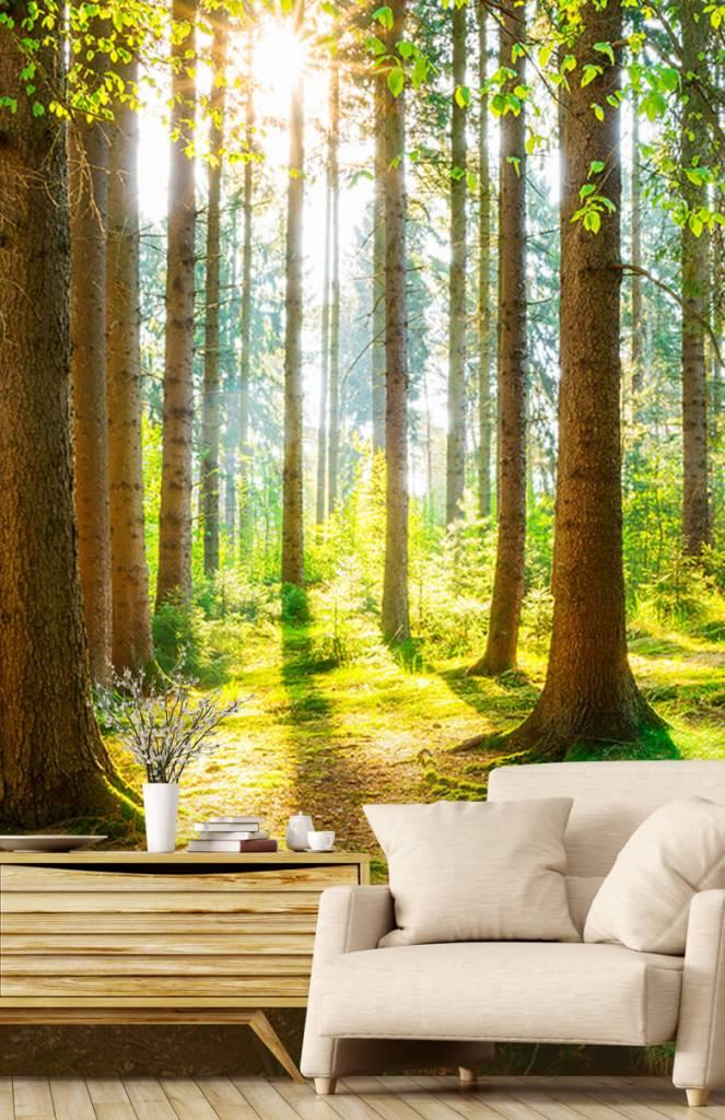 Bomen - Zonsopkomst in het bos - Gang 2