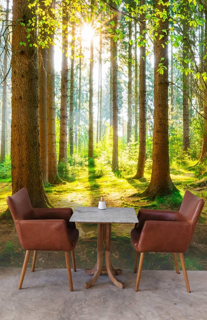 Bomen - Zonsopkomst in het bos - Gang 3