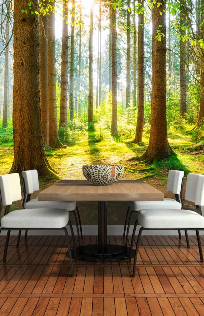 Bomen - Zonsopkomst in het bos - Gang 4