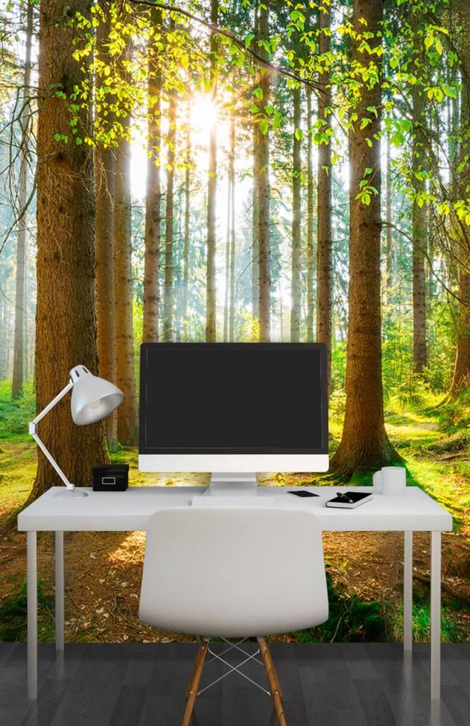 Bomen - Zonsopkomst in het bos - Gang 6