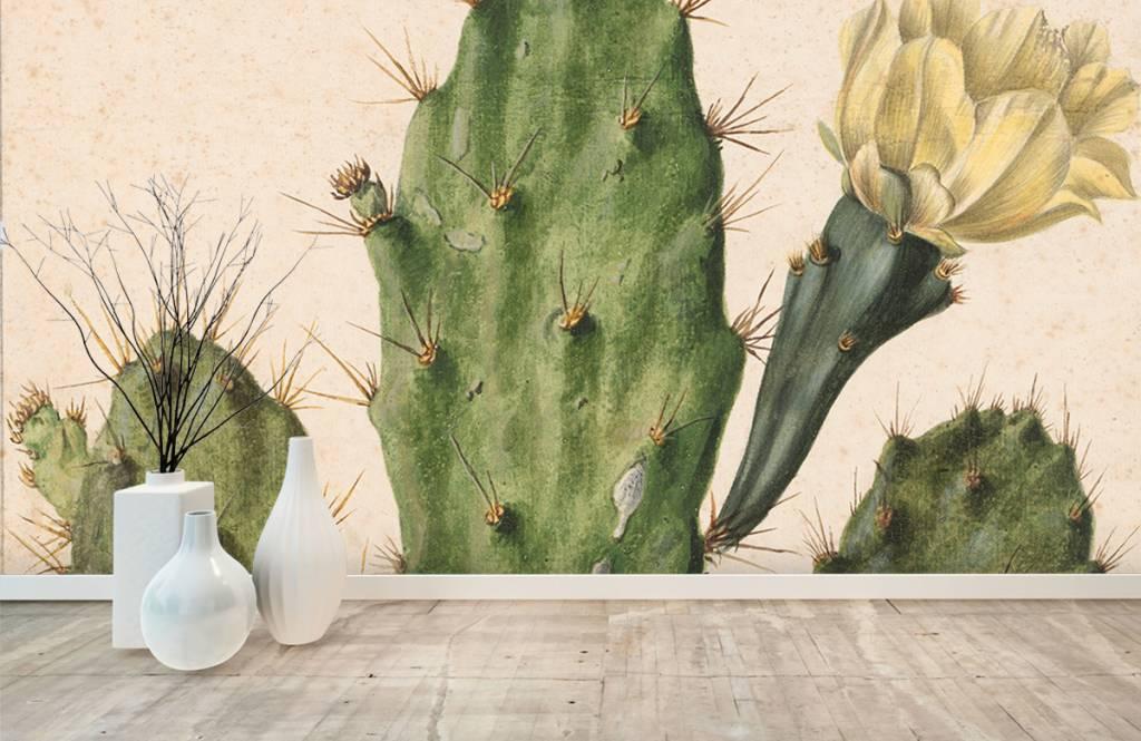 Overige - Bloeiende vijgcactus - Woonkamer 6