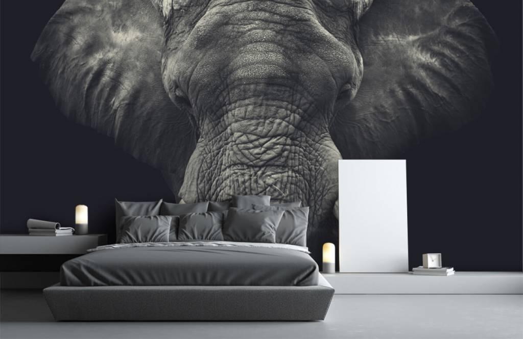 Olifanten - Close-up van een olifant - Slaapkamer 1