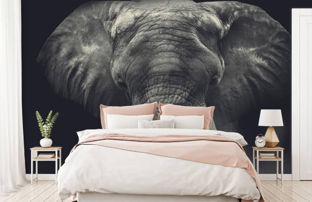 Olifanten - Close-up van een olifant - Slaapkamer 2