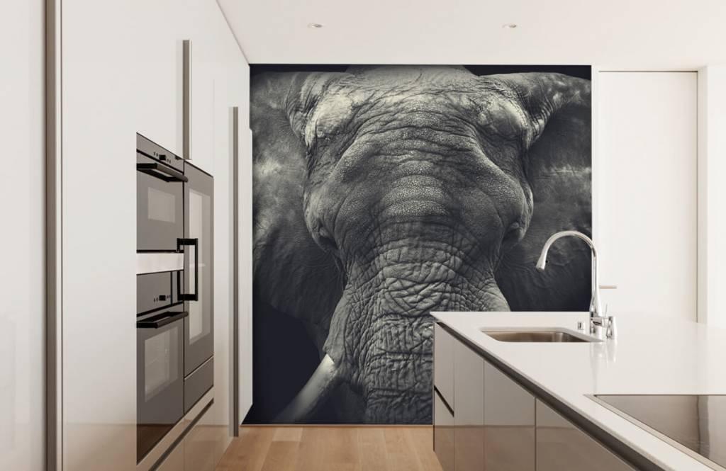 Fotobehang Close-up van een olifant
