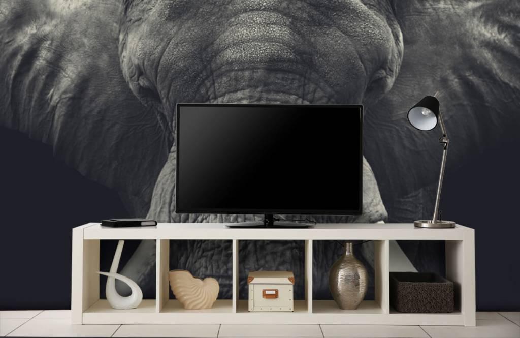Olifanten - Close-up van een olifant - Slaapkamer 4