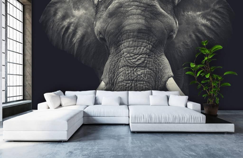 Olifanten - Close-up van een olifant - Slaapkamer 5