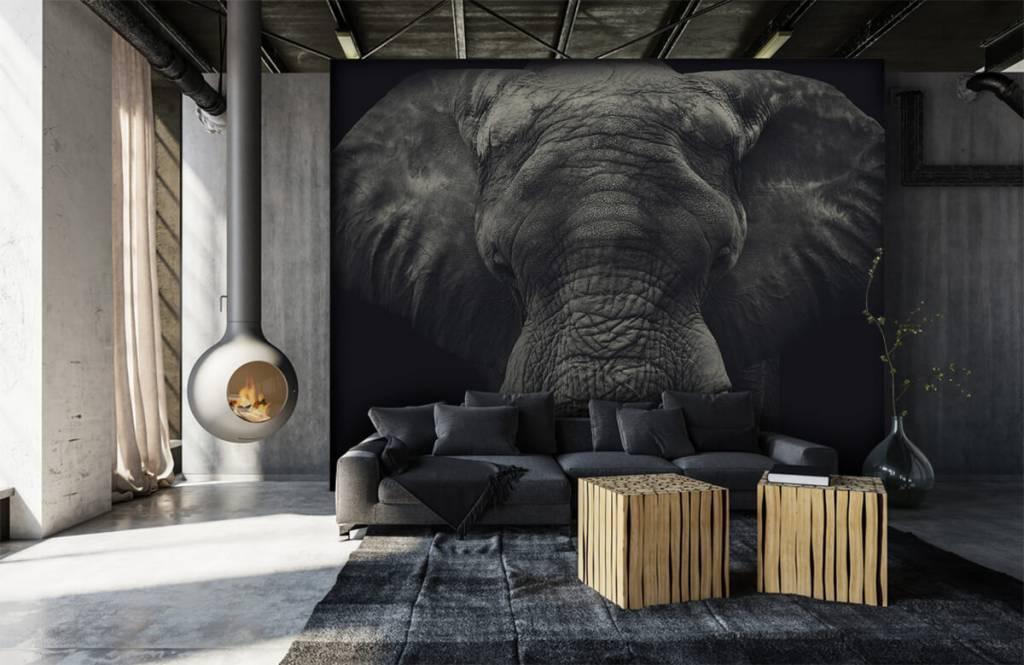 Olifanten - Close-up van een olifant - Slaapkamer 6