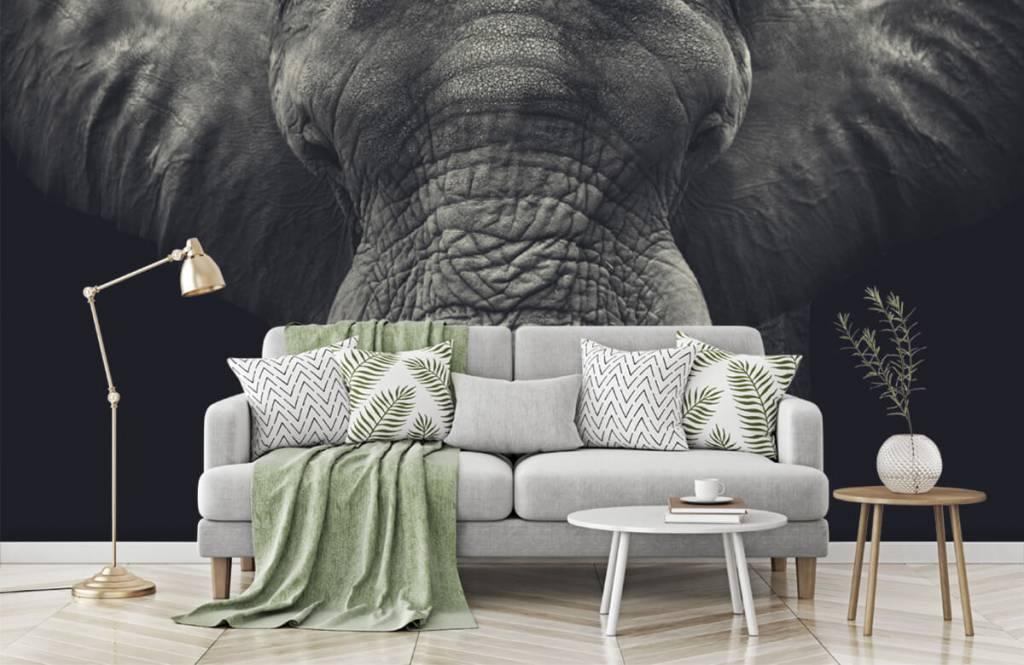 Olifanten - Close-up van een olifant - Slaapkamer 7