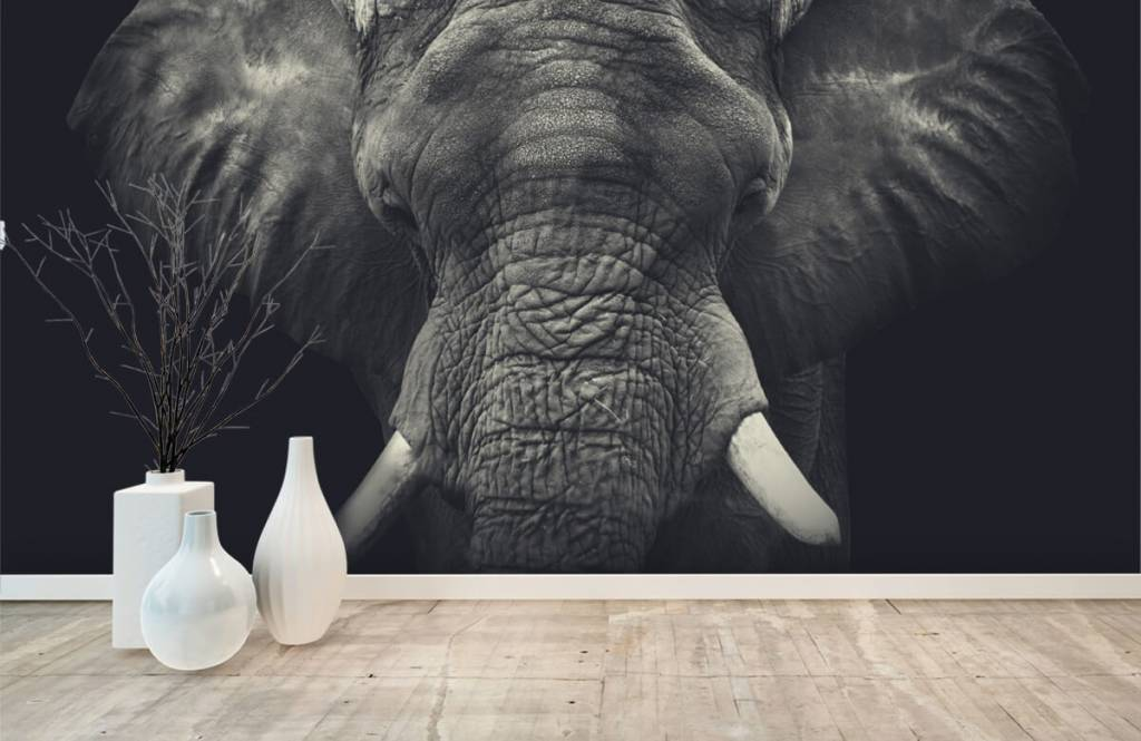 Olifanten - Close-up van een olifant - Slaapkamer 8