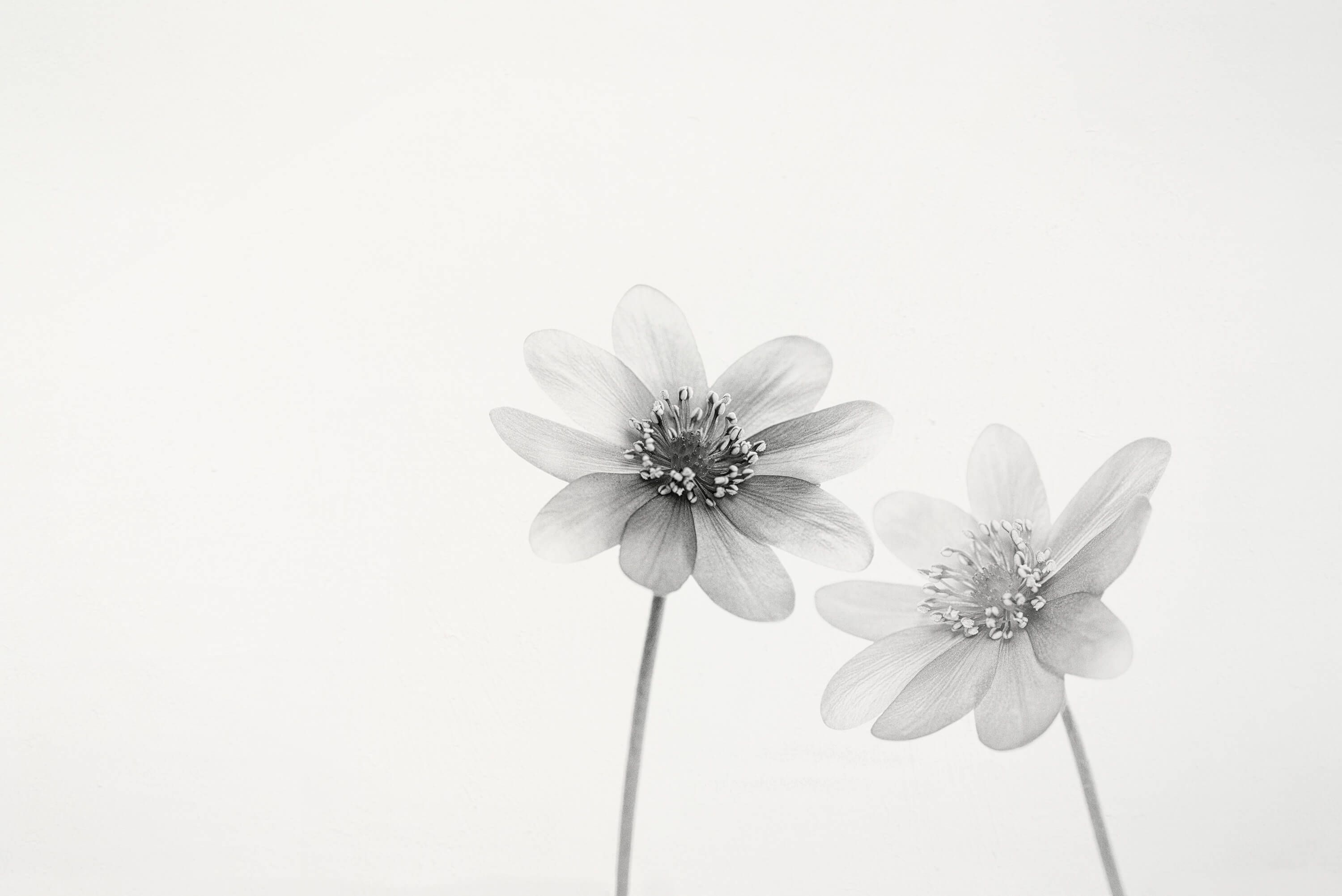 Two small flowers