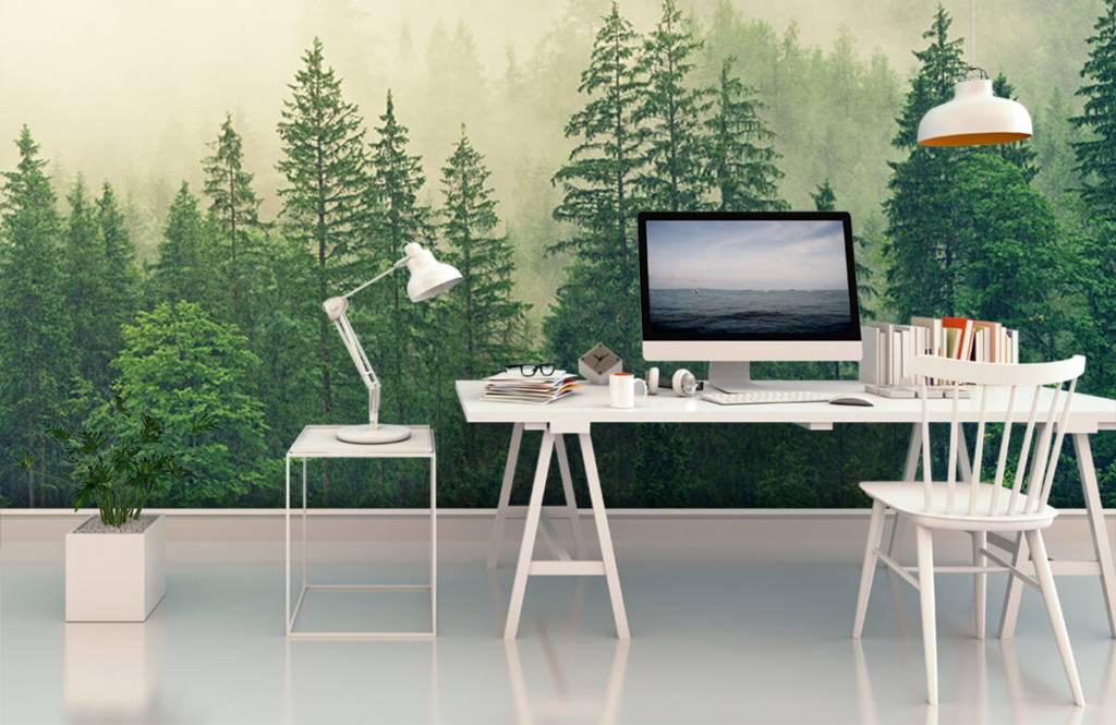 Bos behang - Dennenbomen in de mist - Woonkamer 1