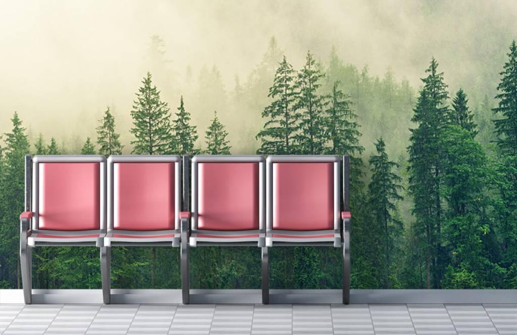 Bos behang - Dennenbomen in de mist - Woonkamer 3