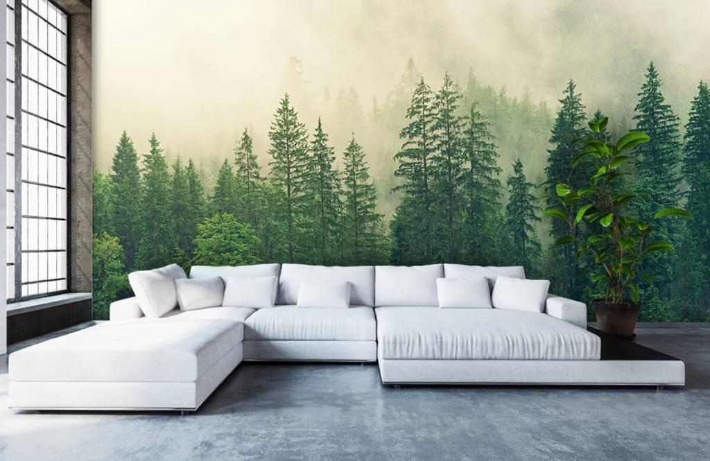 Bos behang - Dennenbomen in de mist - Woonkamer 7
