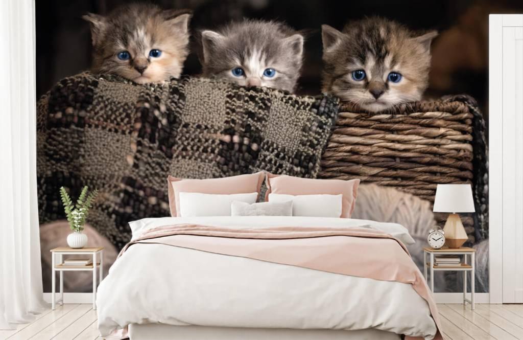 Katten en Poezen - Drie poesjes in een mand - Kinderkamer 1