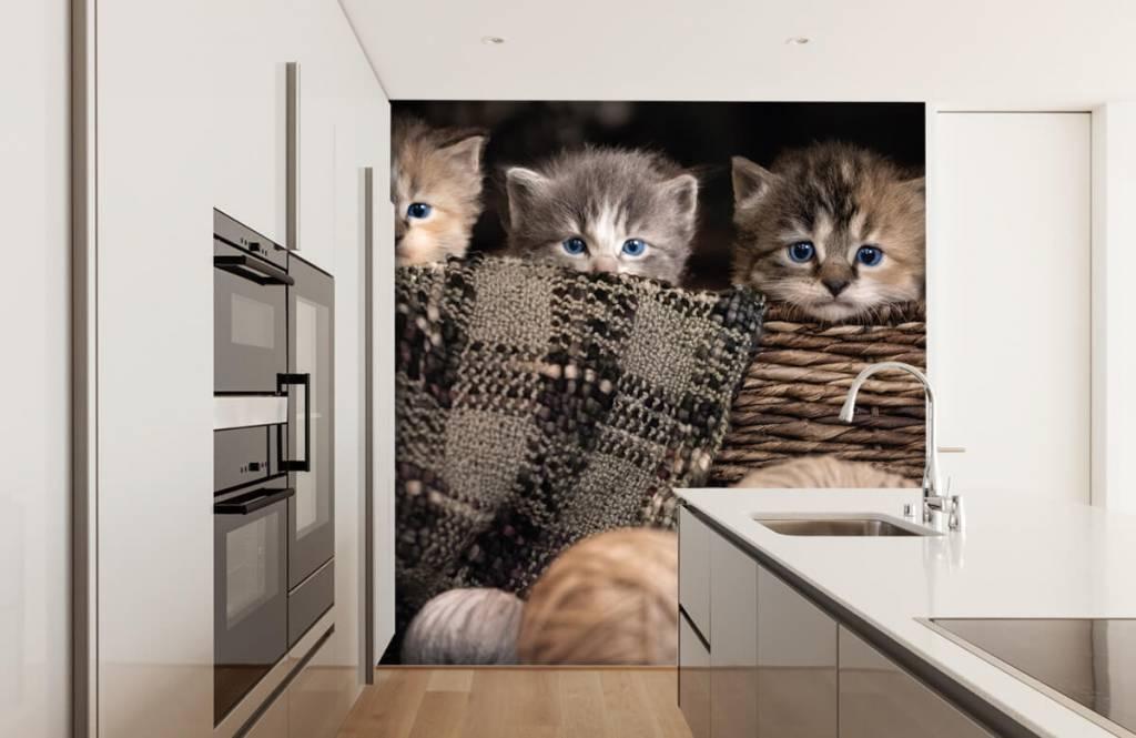 Katten en Poezen - Drie poesjes in een mand - Kinderkamer 2