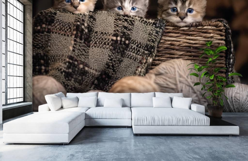 Katten en Poezen - Drie poesjes in een mand - Kinderkamer 3