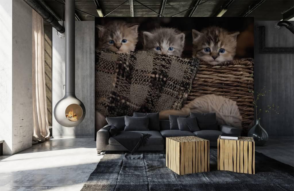 Katten en Poezen - Drie poesjes in een mand - Kinderkamer 4