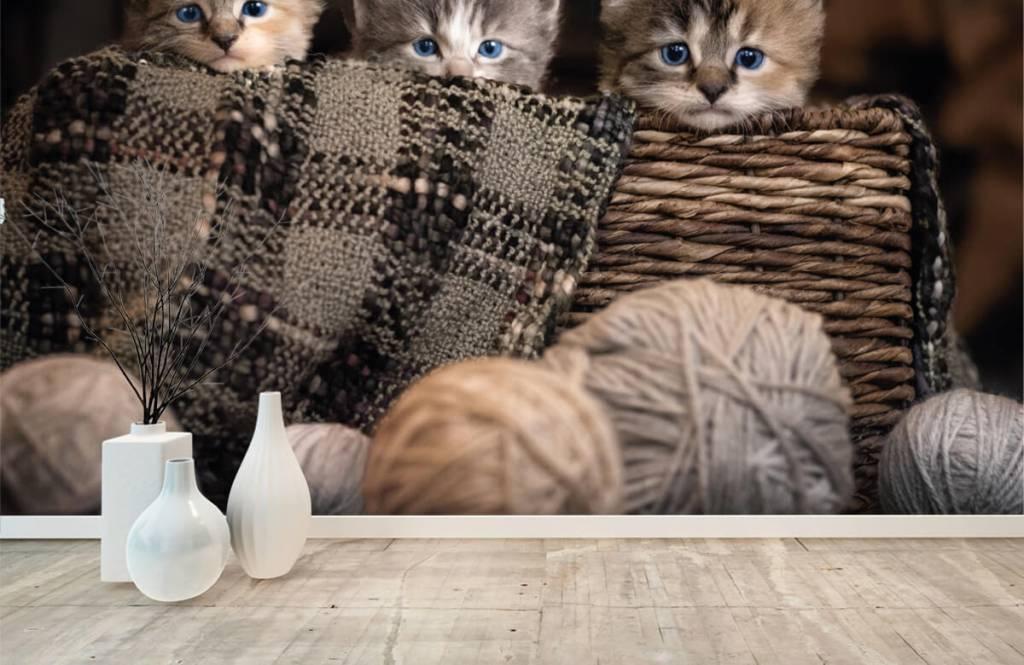 Katten en Poezen - Drie poesjes in een mand - Kinderkamer 5