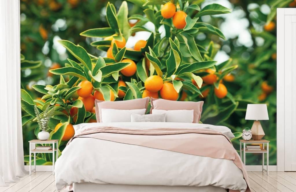Landschap - Fruitboom - Keuken 1