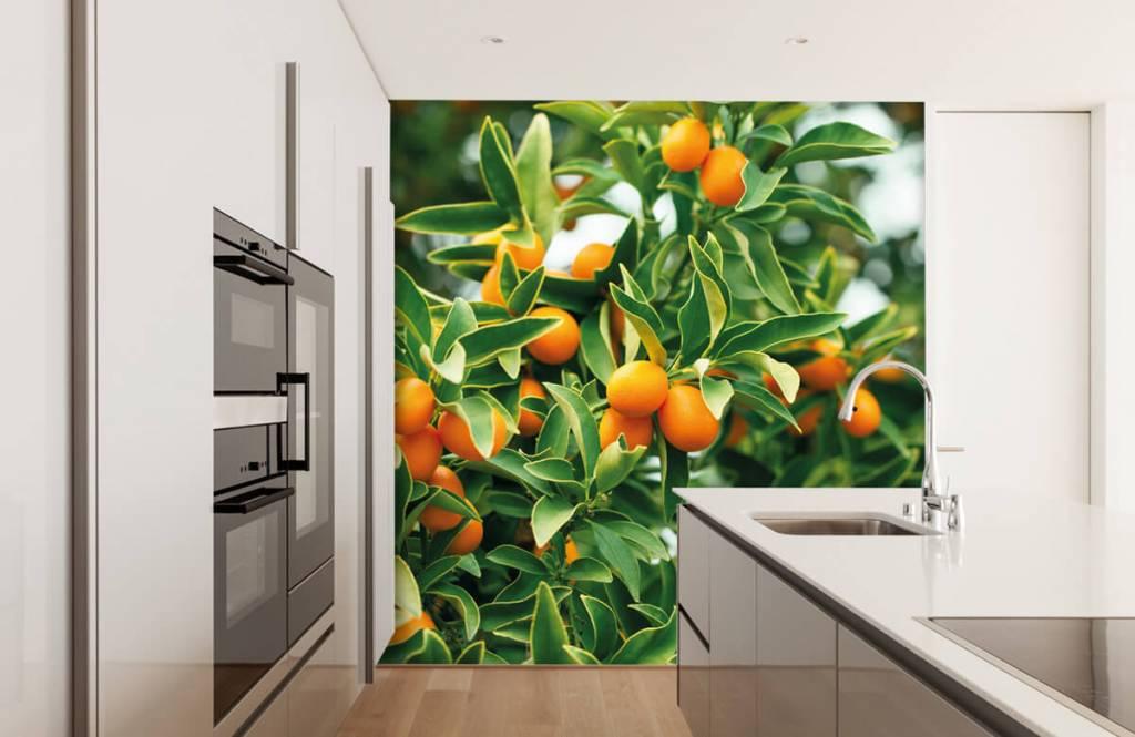 Landschap - Fruitboom - Keuken 7