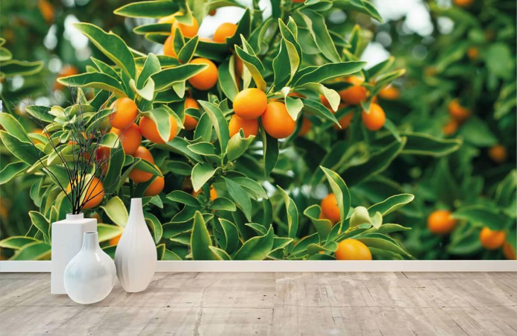 Landschap - Fruitboom - Keuken 8