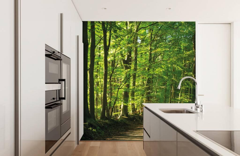 Bos behang - Zonnige weg door een bos - Woonkamer 3