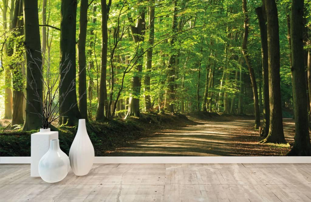 Bos behang - Zonnige weg door een bos - Woonkamer 7