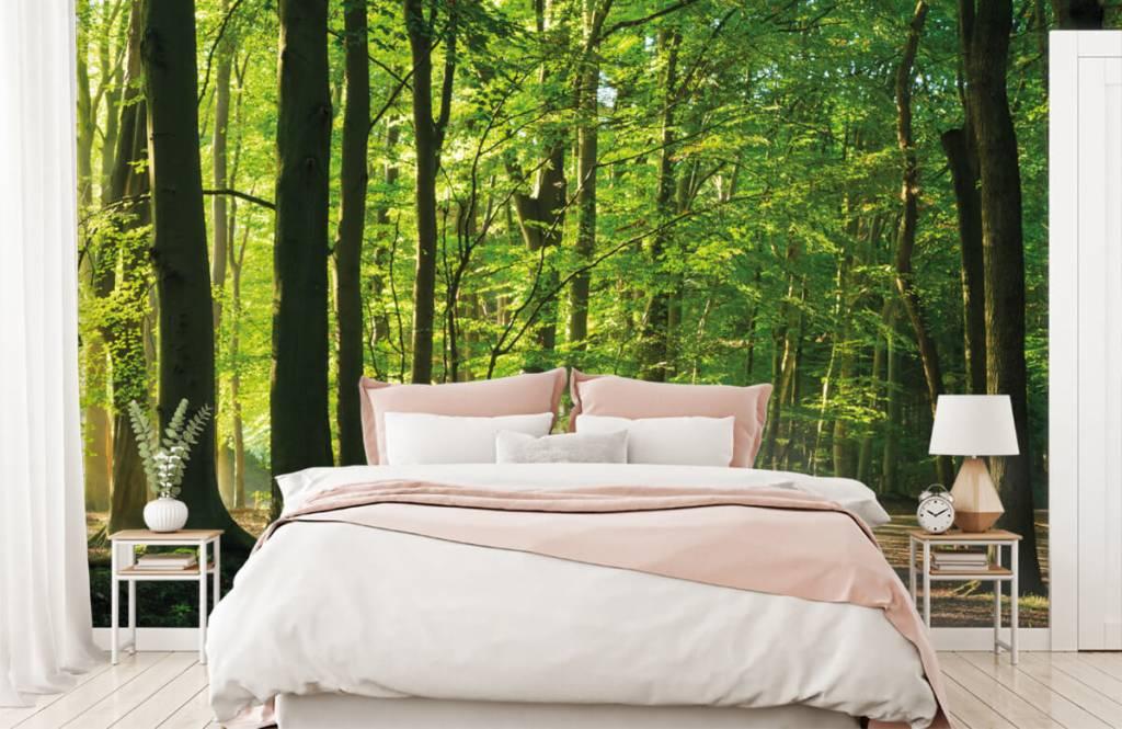 Bos behang - Zonnige weg door een bos - Woonkamer 8